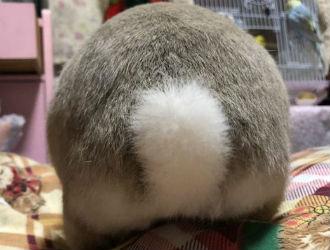 日本兔子屁股摄影展 好可爱好想捏!