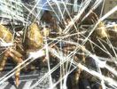 《地球防卫军4.1》最新官方实战演示