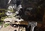 森林之子精美壁纸