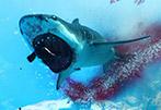 海洋兇手兇殘屠戮人類