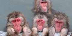 动物也爱泡温泉?日本