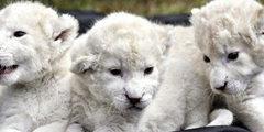一只猫竟然要4万美元?盘点世界上十大最昂贵的宠物