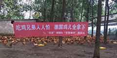 粉丝养鸡场助威《绝地求生》中国队 拉横幅鸡身贴加油