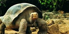 世界上十大最长寿的动物 倒数第一就已经忽视死亡?