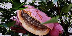 """看起来像是在""""吃翔""""!盘点外形特异的十种奇葩水果"""