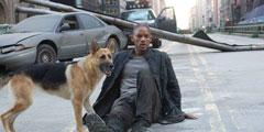 十部欧美经典丧尸电影推荐 一人一狗撑起了灾难大片