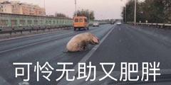 """""""宝马""""撞上""""二师兄"""" 每日轻松一刻1月1日晚间版"""
