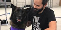 狗年大新闻!《美国末日2》推特新图暗示会有狗同伴