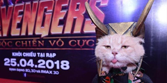 """《复仇者联盟》猫咪cos """"钢铁喵""""一本正经卖黄瓜!"""