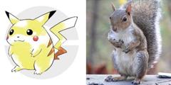 《精灵宝可梦》皮卡丘设计原型披露 就是普通红松鼠