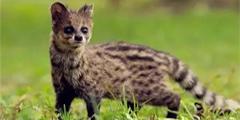 全球8大最濒危的动物 再不爱护 就再也看不到了!