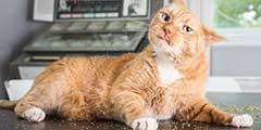 喵星人吸食猫薄荷后的爆笑表情 喵主子秒变表情包?