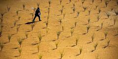 蚂蚁森林七夕前夜全国一天内上万颗爱情合种树夭折!