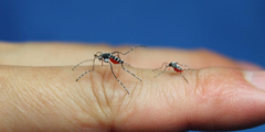 日本大神自制1:1蚊子纸雕模型 被拍死还留下血迹!