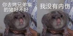 一万种吃竹鼠的理由火遍网络 还被网友们做成表情包