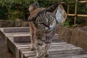 看什么美女来吸猫吧!日本摄影师镜头下的可爱猫咪们