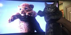 《狮子王》真人版举高高镜头遭恶搞 喵星人来凑场