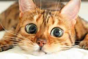 岛国网友举办猫咪比丑大赛 魔性画风主子看了想打人