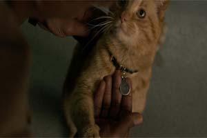 最危险生物!《惊奇队长》中大橘猫古斯是噬元兽!