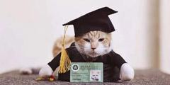 菲律宾大学猫咪吃成脂肪肝 避免喂食学校为其毕业