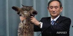 """猫的时代来了 日本新年号""""令和""""发表图遭网友恶搞"""