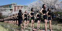 韩大学模特樱花树下练习台步 小姐姐和樱花哪个好看
