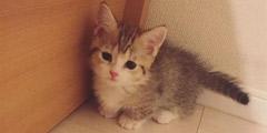 还不给我小鱼干!日本网红猫咪天生委屈脸惹网友怜爱