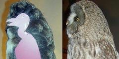 猫头鹰真的不是胖子! 罕见的23种物体内部结构图