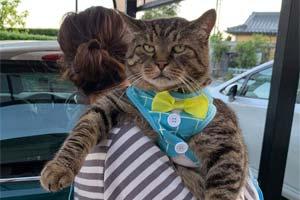 一不小心长到巨猫体重的猫咪们!日本网友晒巨猫萌照
