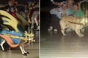 沙雕网友嫌《宝可梦:剑/盾》神兽太丑 开启恶搞模式