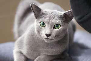 这只自带贵族气息的猫中绅士