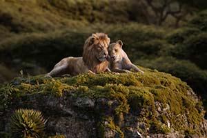 张学友碧昂斯《狮子王》主题曲 歌神天后殿堂级组合