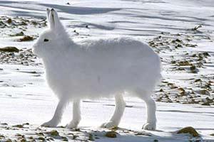 谁说大长腿就是性感的?当北极兔站起来露出大长腿后
