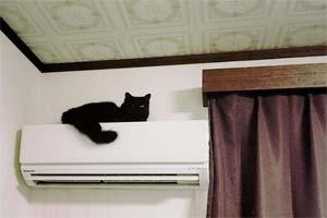"""二头肌超壮硕的黑猫!""""筋肉动物""""追加新成员!"""