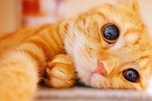 """萌界之王!""""Muta""""一个眼神就能让猫奴们俯首称臣!"""