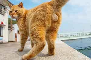两脚兽你看哪呢?日本摄影师奇特视角带你云吸猫!