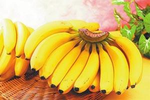 我们以后吃不到香蕉了?2050年香蕉或将完全消失