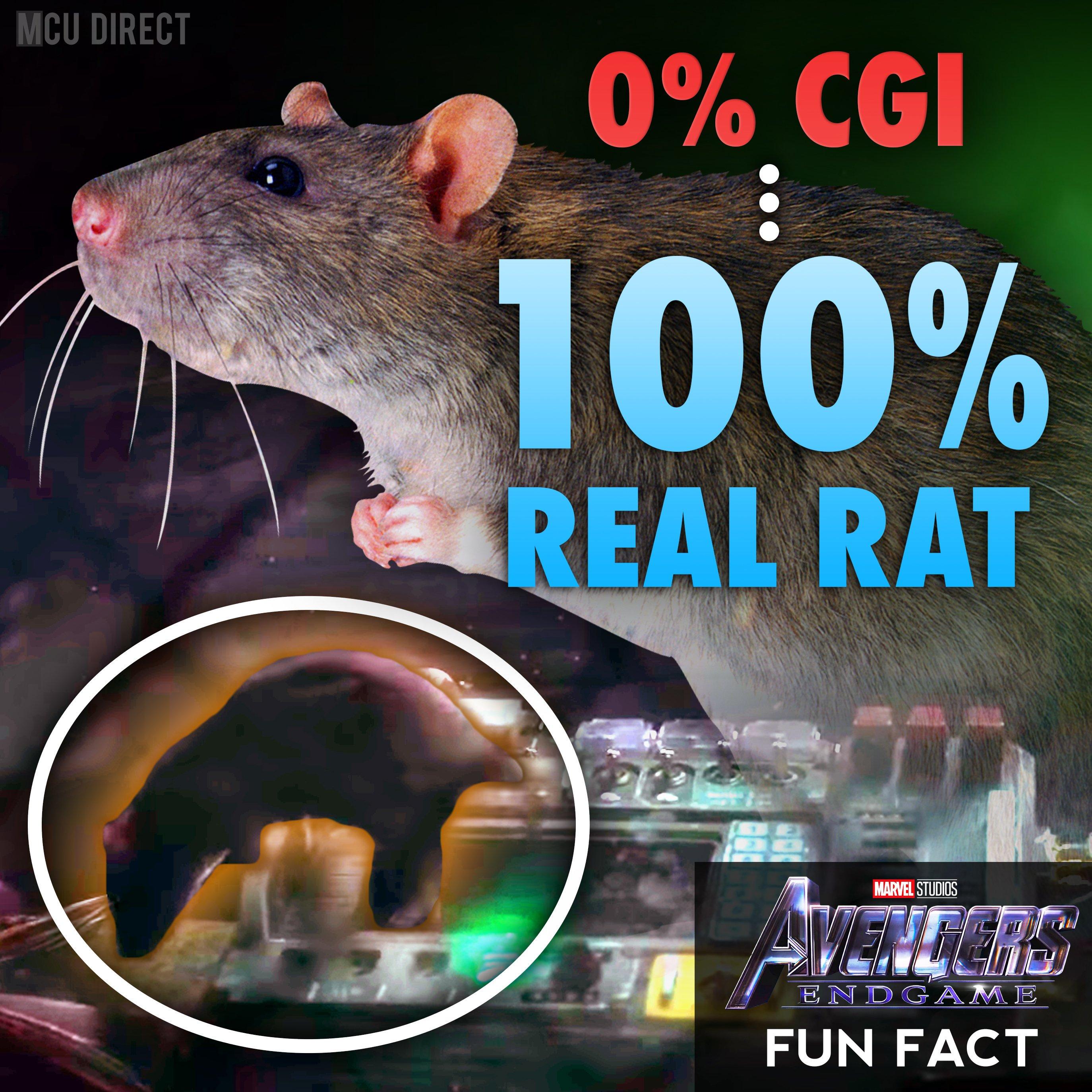 漫威DC大事件 蜘蛛侠或捆绑毒液回MCU 复联4真有其鼠