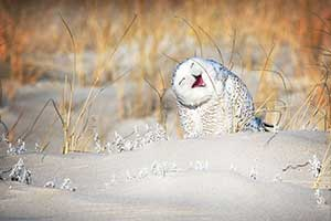 假装不正经!第五届搞笑野生动物摄影奖部分作品赏