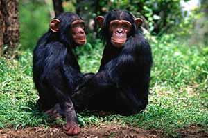 动物没有白眼球?盘点人类与其他动物的六个不同之处