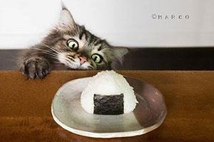 吃相太抢镜!日本猫皇「吃货嘴脸」撩翻一票网友!