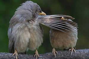 别看!少儿不宜!纯真呆萌的动物照片让人心情开朗