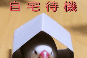 """组织复联看正联!""""自宅待机""""引网友晒沙雕日常!"""