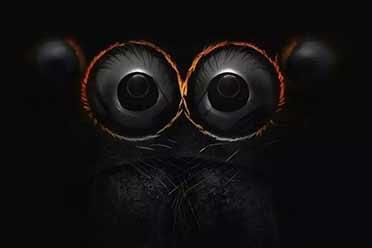小跳蛛眼睛放大后如此惊悚!显微镜下事物的神奇照片