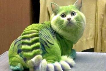 一脸生无可恋!20张被剃毛的宠物照片真的是太搞笑了