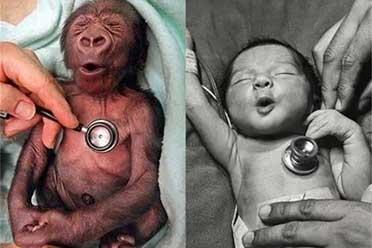 人类和猩猩的宝宝一模一样!29张难得一见的有趣照片