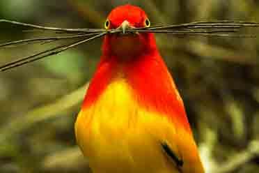 天优游平台优游平台安闲安闲的精灵!清点10部高评估鸟类记载片