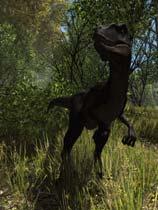 《恐龙森林》免DVD光盘版