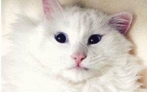 【虐猫狂魔井】-虐猫狂魔的运动日常