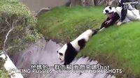 照顾顽皮猫熊就像照顾喝醉的朋友